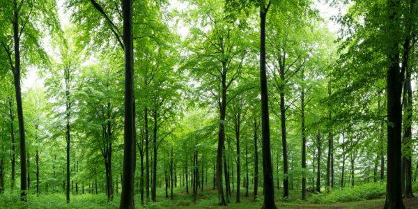 Naturreservat i Sverige